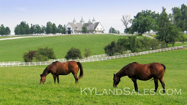 land, sale, buy, farm, land, horse, sale, vacant, land, for, sale, homes, property, real, estate, Perryville, ky, Danville, Kentucky, Lexington, Bluegrass, Harrodsburg, Seller, finance, land, contract, affordable, Boyle County, Centre College, owner will carry