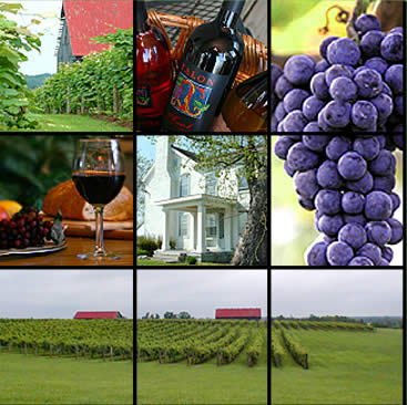 Kentucky Wine Trail