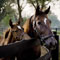 Kentucky Land Sales – Estates, Horse Farms and Cattle Ranches KY Horse Farms, Land for Sale, Cattle Ranches