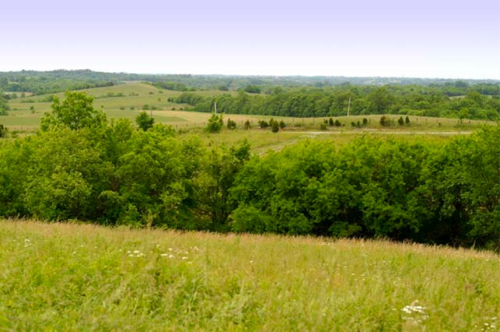 kentucky land sales ky farms for sale land for sale horse farm