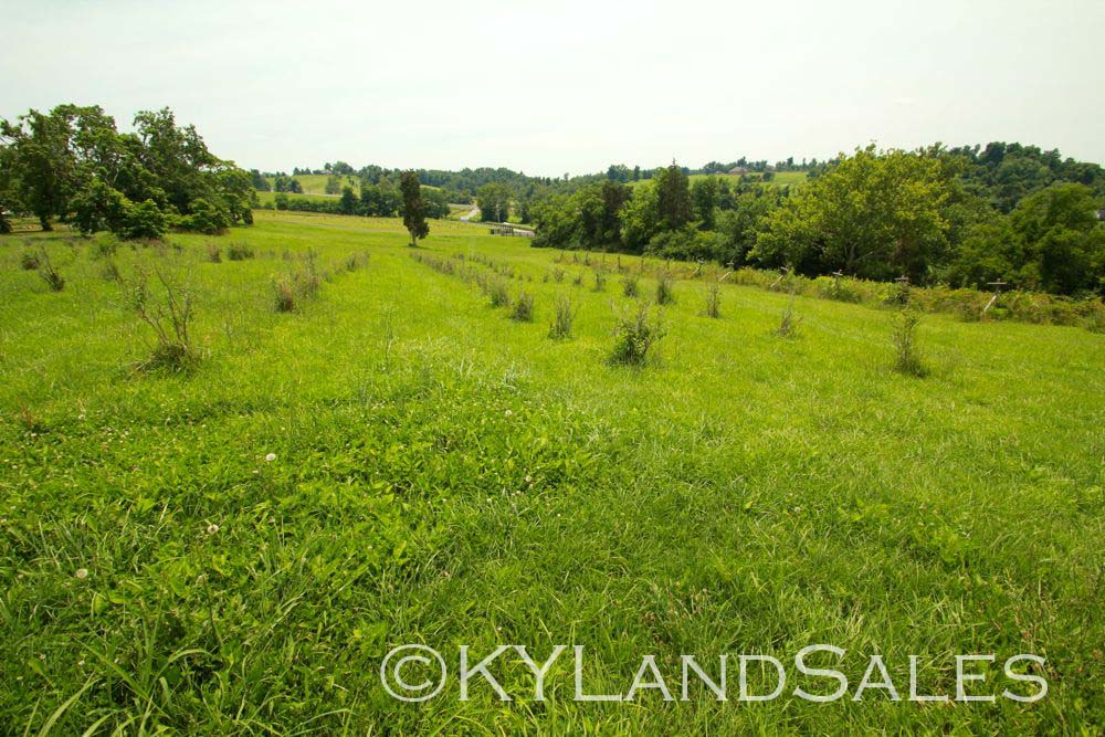 Danville, KY, Organic, Blueberry Farm, home and land for sale, Estate, Kentucky, Realtor, real estate agent, Artist Retreat, homes for sale, Creek, Kentucky Farm Land, Stanford, homes and land for sale, house 4 sale, mls, land, for sale, property