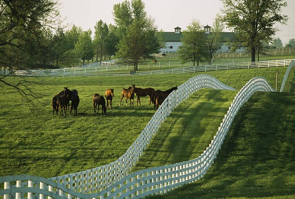 A Kentucky horse farm